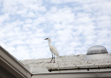 Horizontal image of a white snow egret on a background blue sky with white clouds