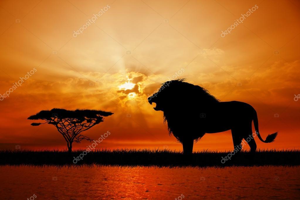 Leone al tramonto foto stock adrenalina 44354067 for Sfondi leone
