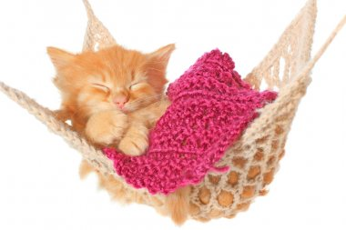 Cute red haired kitten sleeping in hammock