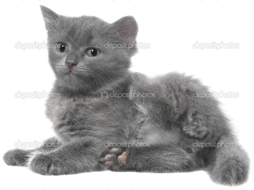 Kočička lez