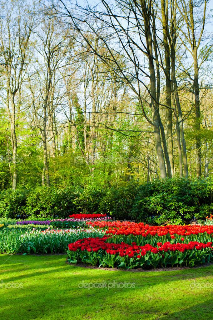 Delightful Paisaje Jardín De Primavera U2014 Foto De Stock
