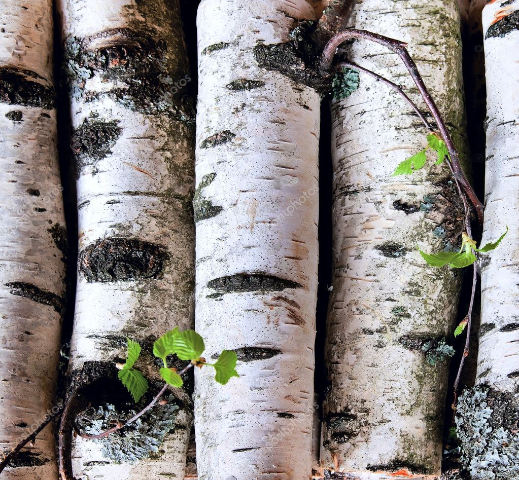 Reserves of birch logs