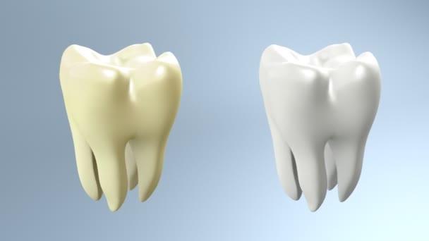 Zahnvergleich weißer Hintergrund