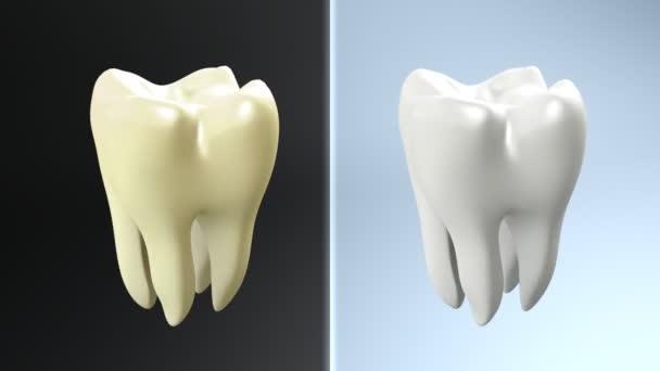 Zahnvergleich