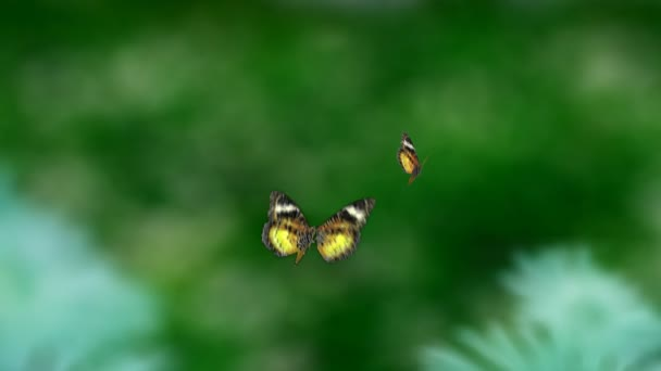 Yellow Butterfly flying