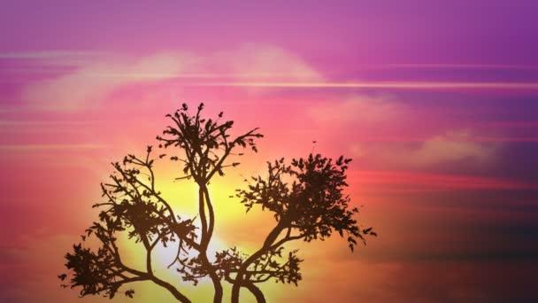 východ slunce velký strom