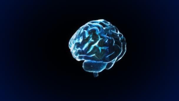 Rotation blue X-ray Brain of biology