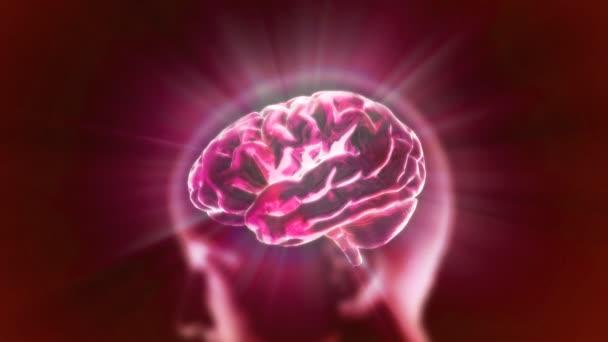 červená rentgenové mozek biologie