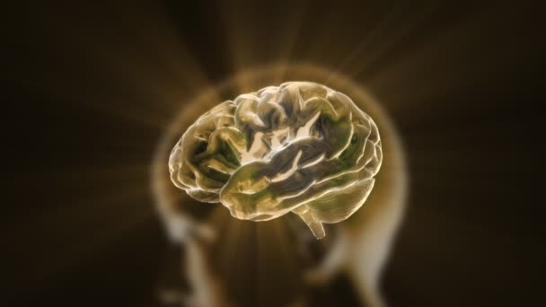 Gold flare of X-ray Brain technology