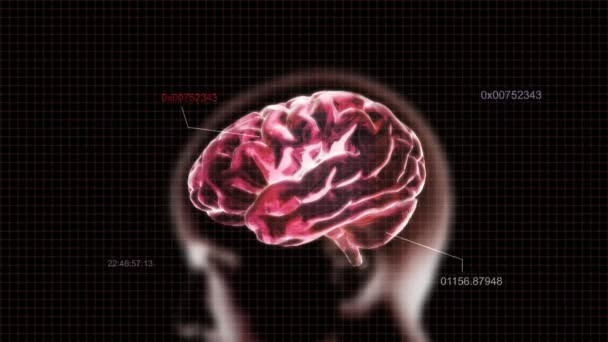 Decoding of red X-ray Brain of biology
