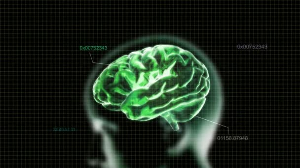 Green X-ray Brain with time code of biology