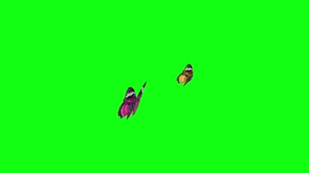 schermo verde farfalla