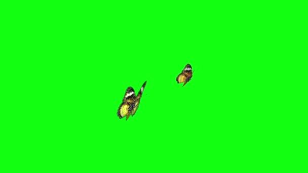 motýl zelený obrazovky