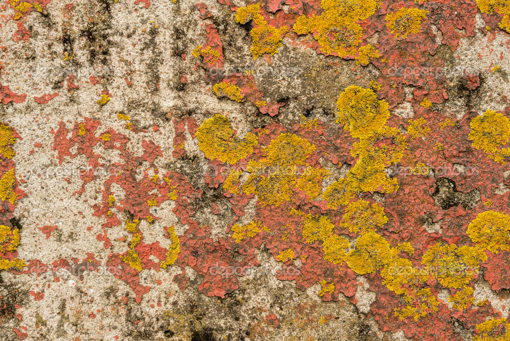 Peinture qui s 39 caille sur b ton et lichen sur le c t d - Peinture qui s ecaille ...