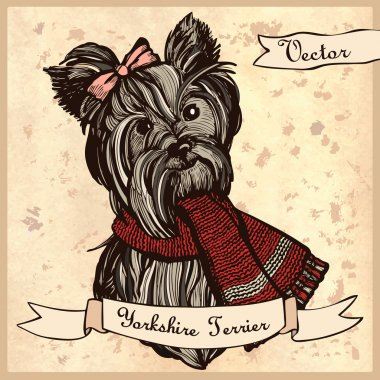 Illustration of a cute Yorkshire Terrier