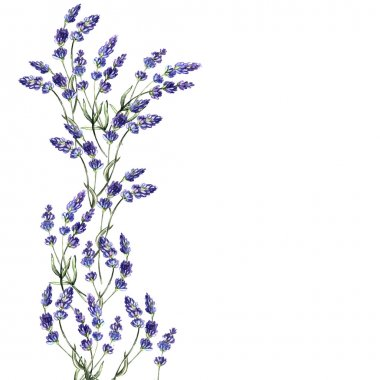 Watercolor decoration of lavender flowers