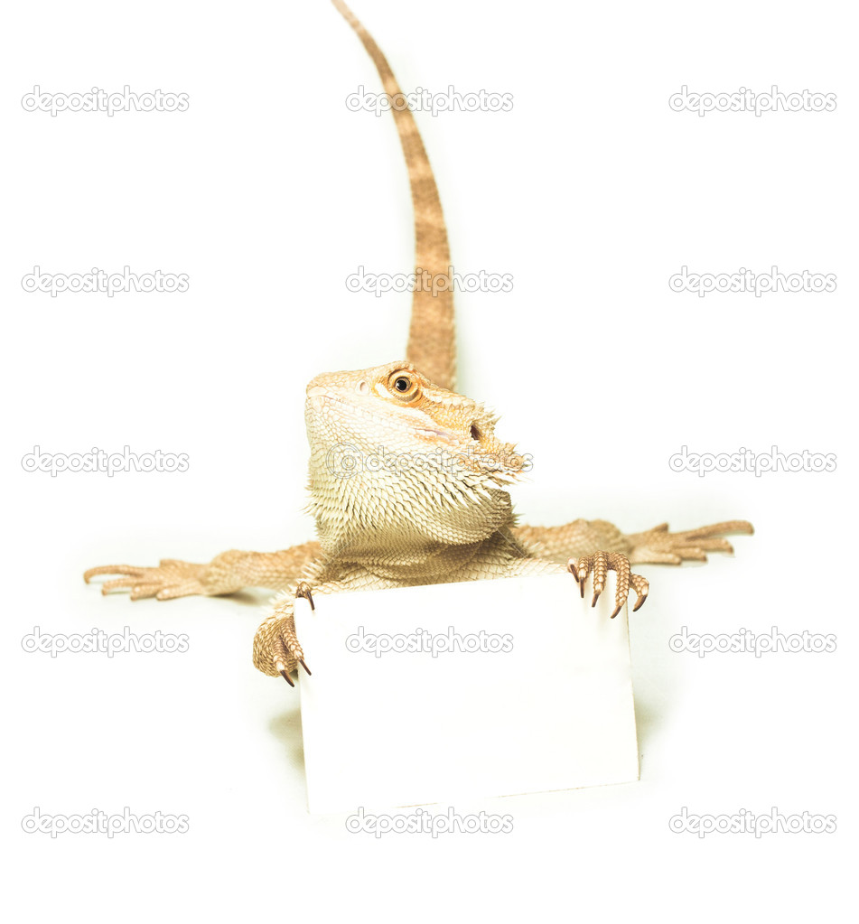 Lizard holding card in hand