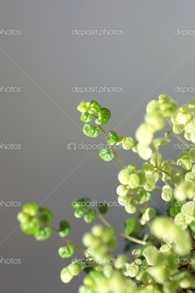 Branches houseplant
