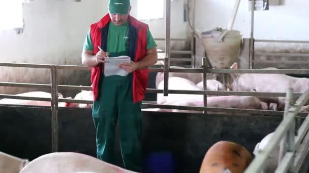 Zemědělec během počítání prasat