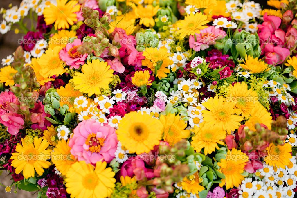 Bela cole o colorida de flores primavera ver o celebra o - Plantas de temporada primavera ...