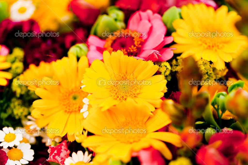 Bella collezione colorata di fiori primavera estate festa - Fiori da giardino primavera estate ...