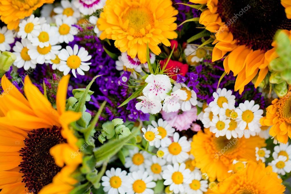 Bella collezione colorata di fiori primavera estate festa foto stock nilswey 28127333 - Fiori da giardino primavera estate ...