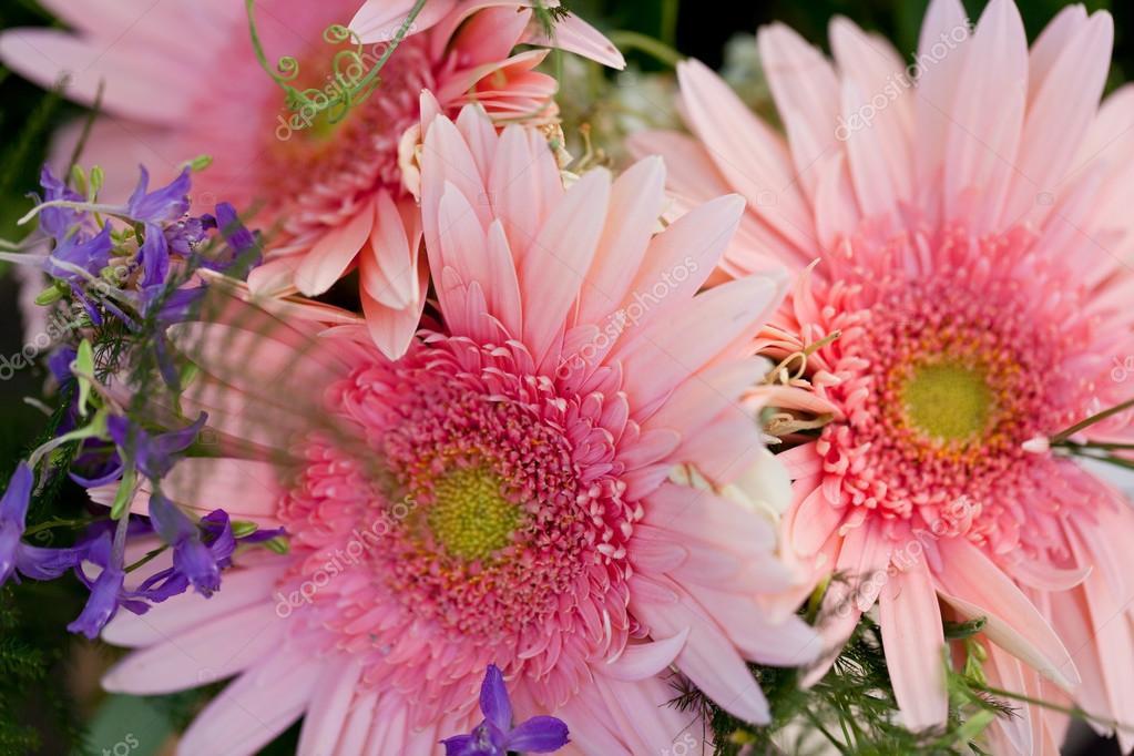 belle collection color e des fleurs printemps t photographie nilswey 29990005. Black Bedroom Furniture Sets. Home Design Ideas