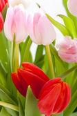 červené a růžové tulipány