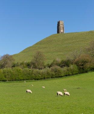 Glastonbury Tor Somerset England uk