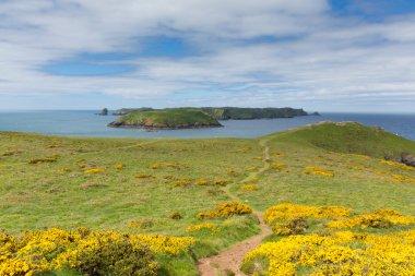 Skomer Island Pembrokeshire West Wales UK