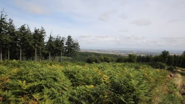 Wooded area on Quantock Hills Somerset England views towards Weston-super-mare and Bristol Channel