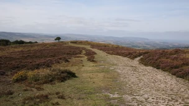 View on top the Quantock Hills Somerset England with purple heather and views