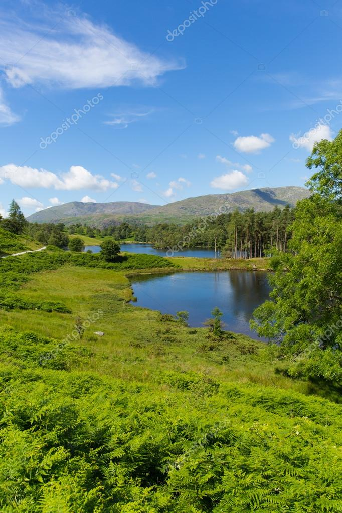 Tarn Hows near Hawkshead Lake District National Park England uk