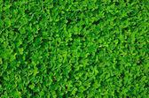 Fotografia consistenza della pianta verde