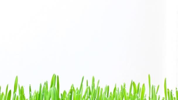 čerstvé zelené trávě hranice s rostoucí dešťové kapky