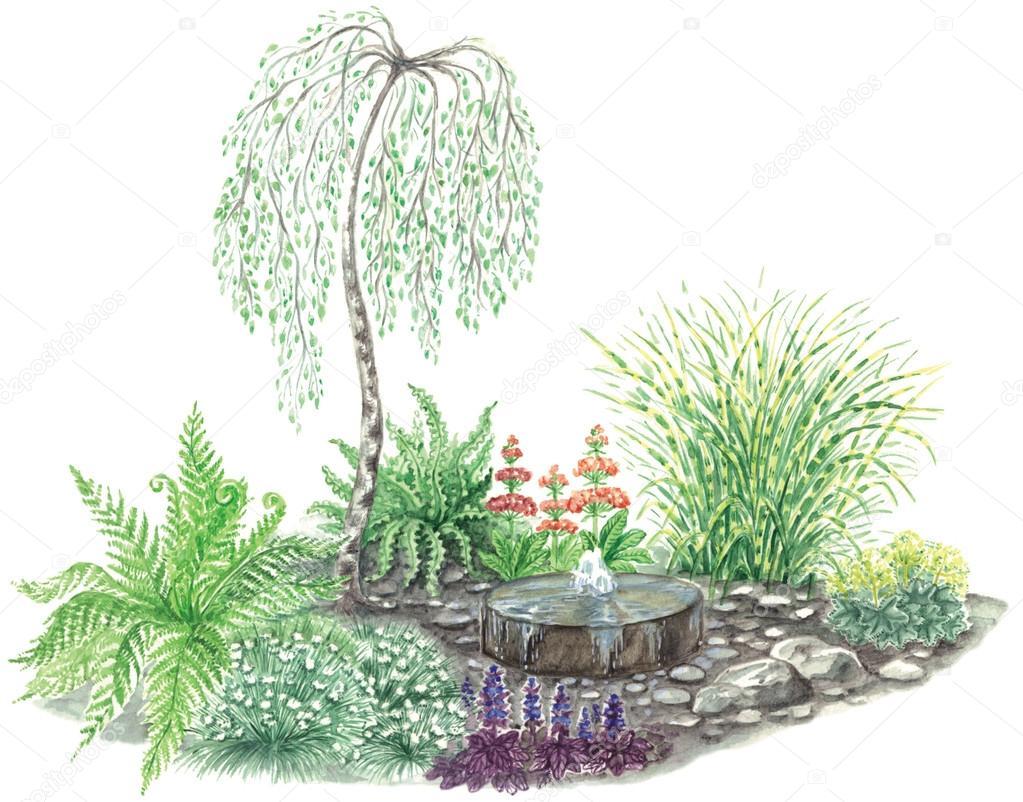 disegno del giardino con piccola fontana e betulla piangente ... - Giardino Fiorito Disegno