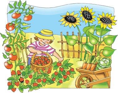 Little farmer boy picking strawberry