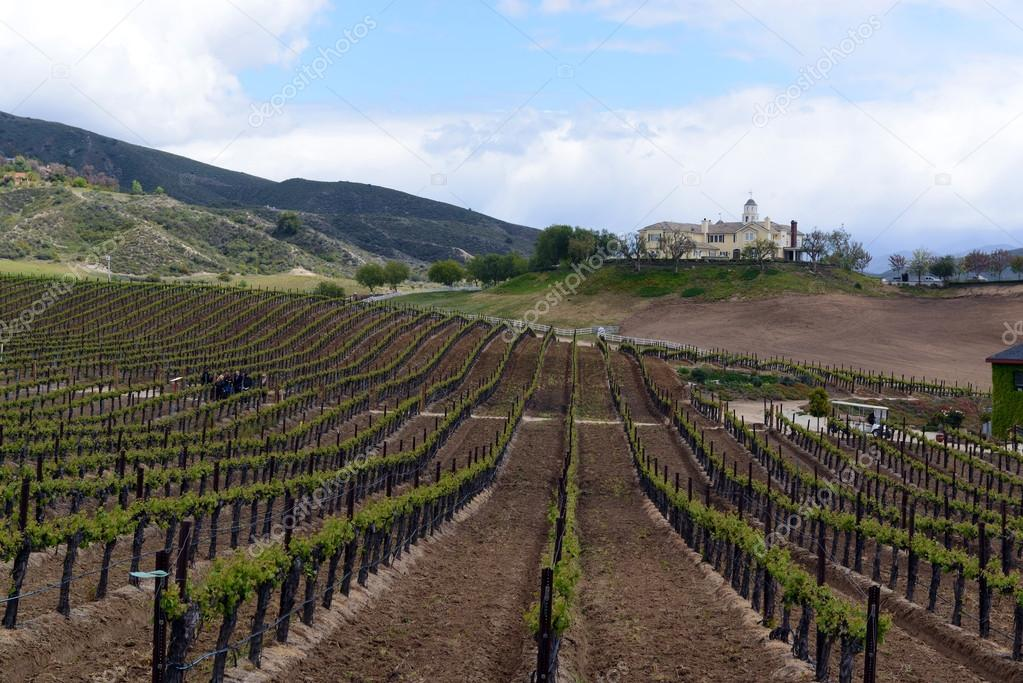 Vineyards of Temecula in North County San Diego