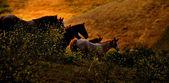 Fotografie křížení koně za soumraku