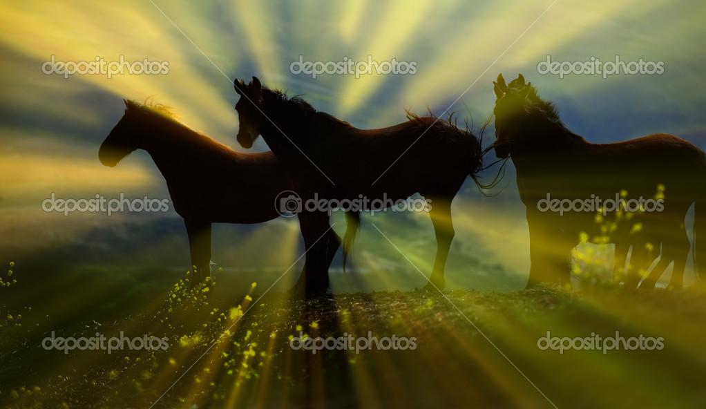 Freedom stallion