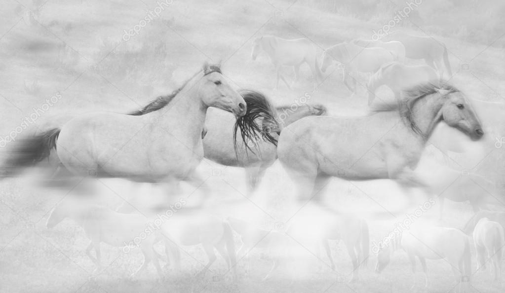 Three Horses Running blurred