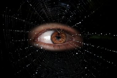 Human eye and spider web