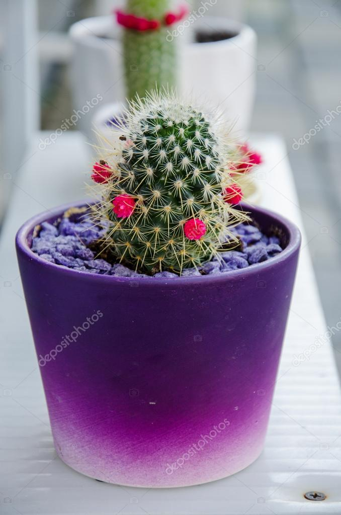 Cactus with small pink flowers stock photo tairen10 31048607 cactus with small pink flowers growing in bright ceramic pot photo by tairen10 mightylinksfo Images
