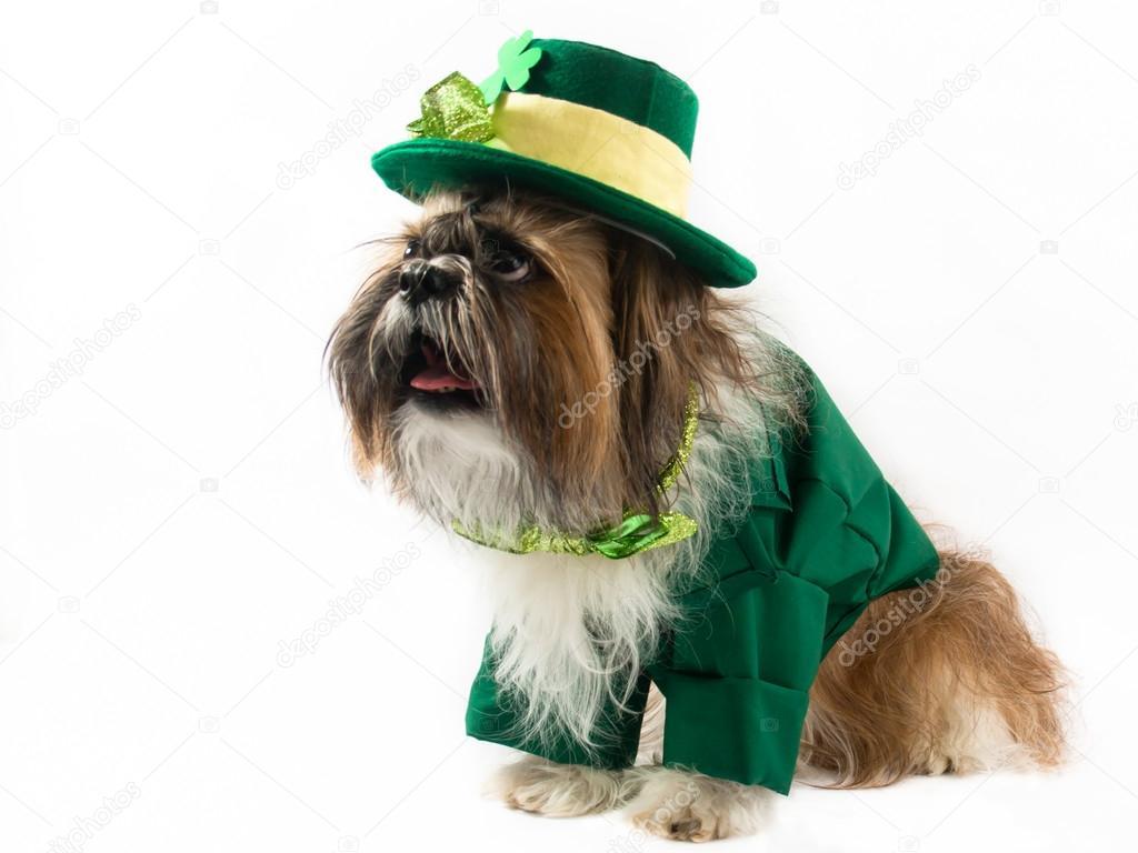 St Patrick's Day Dog