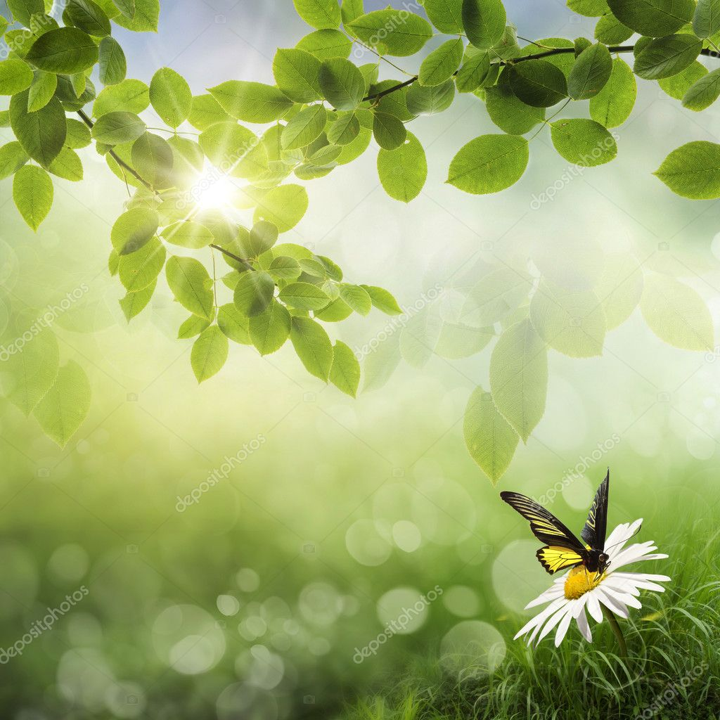 Butterfly, Fresh Spring bokeh background