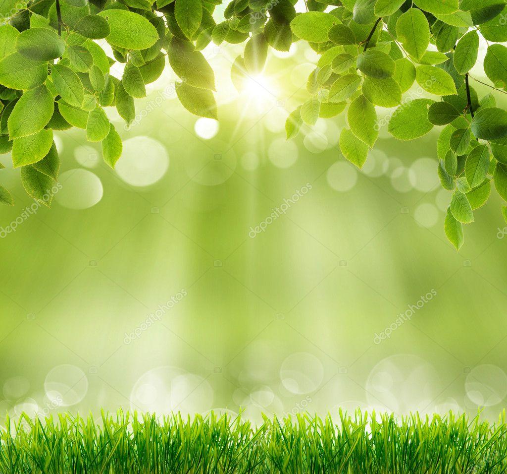 Фотообои Natural green background