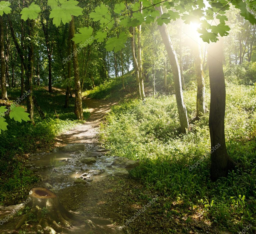 Фотообои Green forest background in sunny day