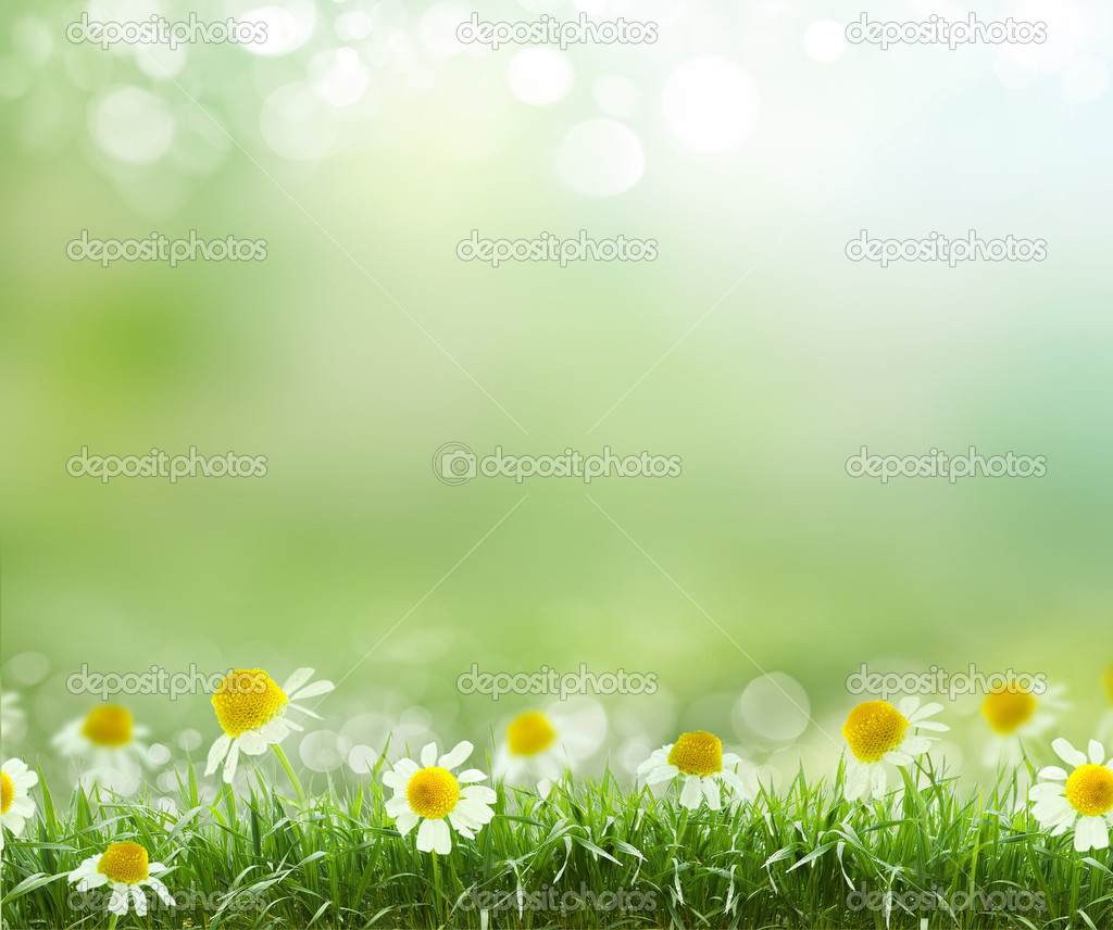 Spring Abstract Background With Daisies Stock Photo