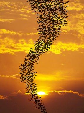Bats flying againt sun