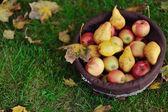 jablka a hrušky